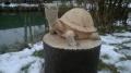 Черепаха на пеньке из оставшегося пенька от дерева | Скульптура на корню
