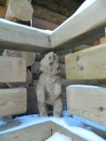Мишка в ограде дома | Скульптуры