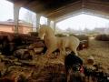 Процесс изготовления коня. | Фестивальная площадка на Святоозерской улице. Москва, Косино-Ухтомское.
