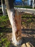 Резная скульптура в стволе дерева в Пензенском зоопарке | Скульптуры в Пензенском зоопарке