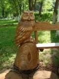 Сова охраняет скамейку в Измайлово | Измайловский парк